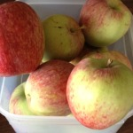 Our organic Apple Harvest; peeled and cut for the cake. It was peeled, cut, cored and shredded for the cupcakes